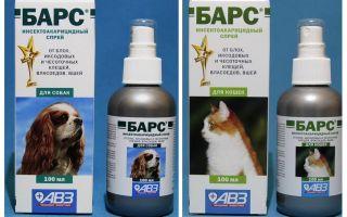 बिल्लियों और कुत्तों के लिए fleas से स्प्रे बार्स