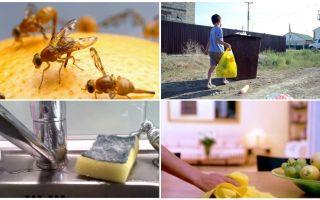 अपार्टमेंट में छोटी मक्खियों से छुटकारा पाने के लिए कैसे