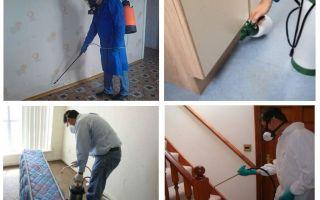 अपार्टमेंट में पेशेवर प्रजनन bedbugs