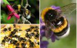 पृथ्वी के विवरण और तस्वीरें bumblebee