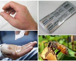 मधुमक्खी बिट अगर क्या करना है