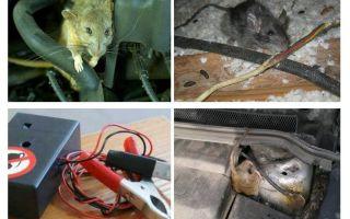 एक कार के हुड के नीचे चूहों से छुटकारा पाने के लिए कैसे