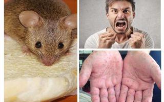 चूहों से क्या संक्रमित किया जा सकता है