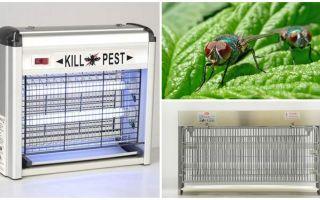 घर पर मक्खियों के लिए जाल कैसे बनाते हैं