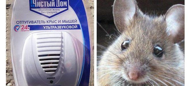 चूहों और चूहों से अल्ट्रासोनिक पुनर्विक्रेता स्वच्छ घर