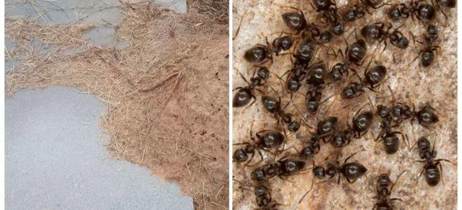 कब्र पर चींटियों से छुटकारा पाने के लिए कैसे