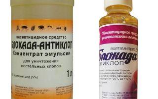 Bedbugs से नाकाबंदी विरोधी बग