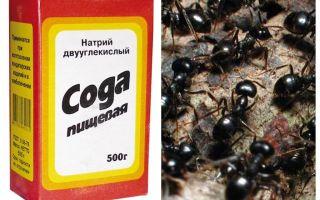 बगीचे में चींटियों के खिलाफ सोडा
