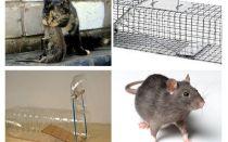 एक निजी घर से चूहों को कैसे प्राप्त करें