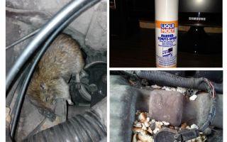 कार के लिए स्प्रे चूहों