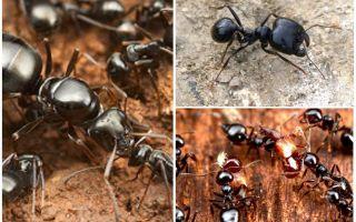 चींटियों के कागजात