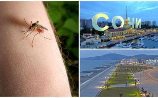 सोची और एडलर में मच्छर हैं