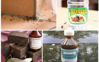 एक घर या अपार्टमेंट में चींटियों से लड़ना