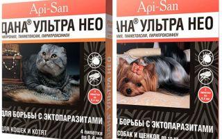 बिना अल्ट्रा नियो बिल्लियों और कुत्तों के लिए fleas से गिरता है