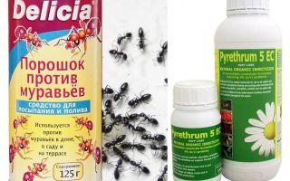 एक अपार्टमेंट या घर में चींटी जहर
