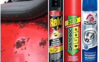कार से चींटियों को कैसे निकालें
