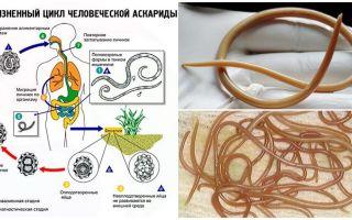 वयस्कों में ascariasis के लक्षण और उपचार