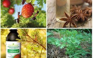 स्ट्रॉबेरी में चींटियों से कैसे निपटें
