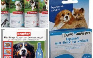 कुत्ते के लिए फ्ली और टिक उपचार