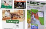 बिल्लियों और बिल्ली के बच्चे के लिए fleas से withers पर बूंदों
