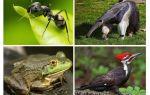चींटियों कौन खाता है