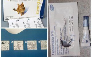 Fleas और कीड़े से बिल्लियों के लिए withers पर सबसे अच्छी बूंदें