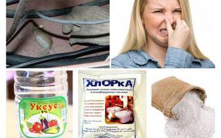 चूहों की गंध से छुटकारा पाने के लिए कैसे