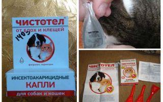 बिल्लियों और कुत्तों के लिए fleas से celandine की बूंदें