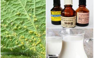 एफिड्स से आयोडीन के साथ दूध