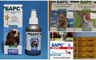 कुत्तों और बिल्लियों के लिए टिकों के खिलाफ तेंदुए