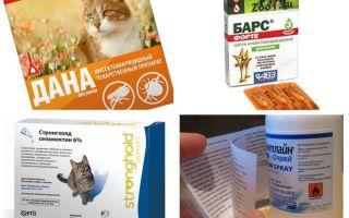 बिल्लियों के लिए सबसे अच्छा पिस्सू उपचार