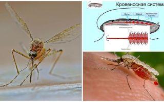 मच्छरों की संरचना के बारे में दिलचस्प तथ्य