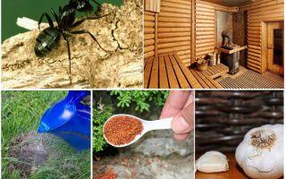 स्नान से चींटियों को कैसे निकालें