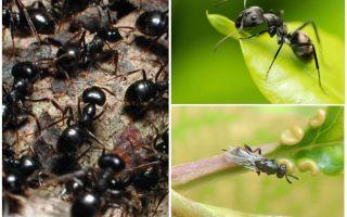 रूस और दुनिया में चींटियों के प्रकार