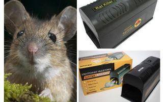 इलेक्ट्रो mousetrap