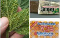 पौधों पर एफिड्स से तार और घरेलू साबुन