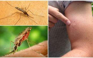 अगर आपको एनोफेलेस मच्छर से काटा जाता है तो क्या करें