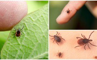 सभी के बारे में ticks