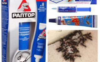 सबसे अच्छा चींटी उत्पादों