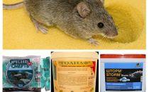 चूहों से जहर