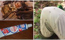 मच्छरों के लिए लोक उपचार