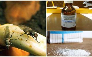 प्याज मक्खियों से छुटकारा पाने के लिए कैसे