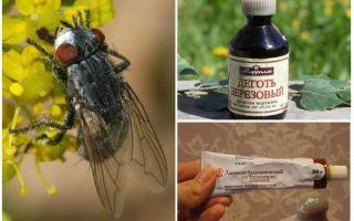 मनुष्यों के लिए gadflies और घोड़े के लिए उपाय