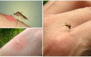 क्यों मच्छर दूसरों के मुकाबले कुछ लोगों को काटते हैं