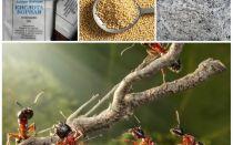 बगीचे की साजिश लोक उपचार में चींटियों से लड़ना