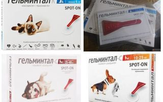 बिल्लियों और कुत्तों के लिए सूखने पर जेलमिंटल गिरता है