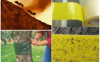 बगीचे में पेड़ों में चींटियों से कैसे निपटें