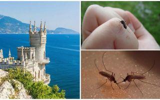 क्या Crimea में मच्छर हैं