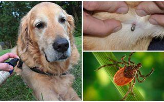 कुत्तों और fleas के खिलाफ कुत्ते के लिए स्प्रे
