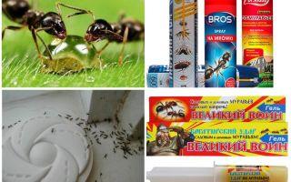 चींटियों और एन्थिल को कैसे नष्ट करें